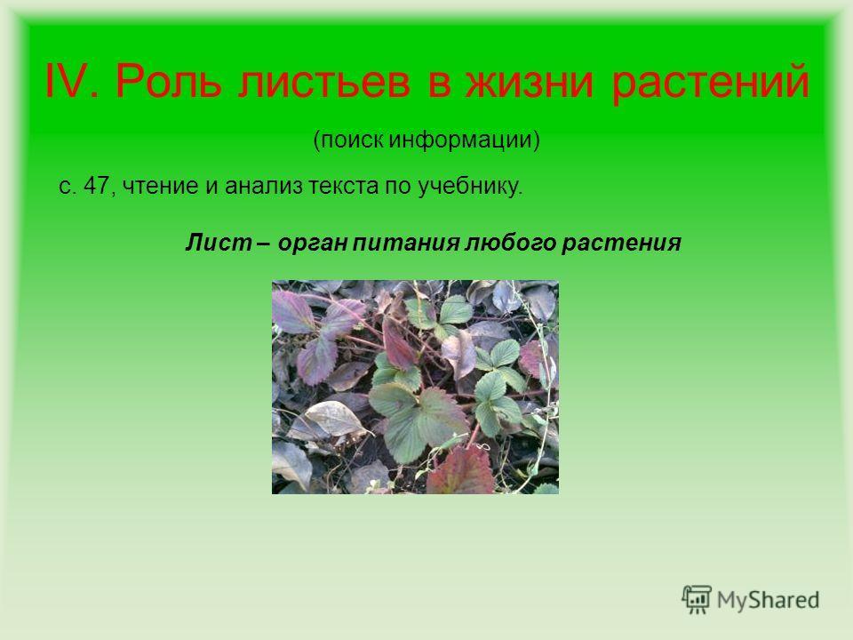 IV. Роль листьев в жизни растений (поиск информации) с. 47, чтение и анализ текста по учебнику. Лист – орган питания любого растения