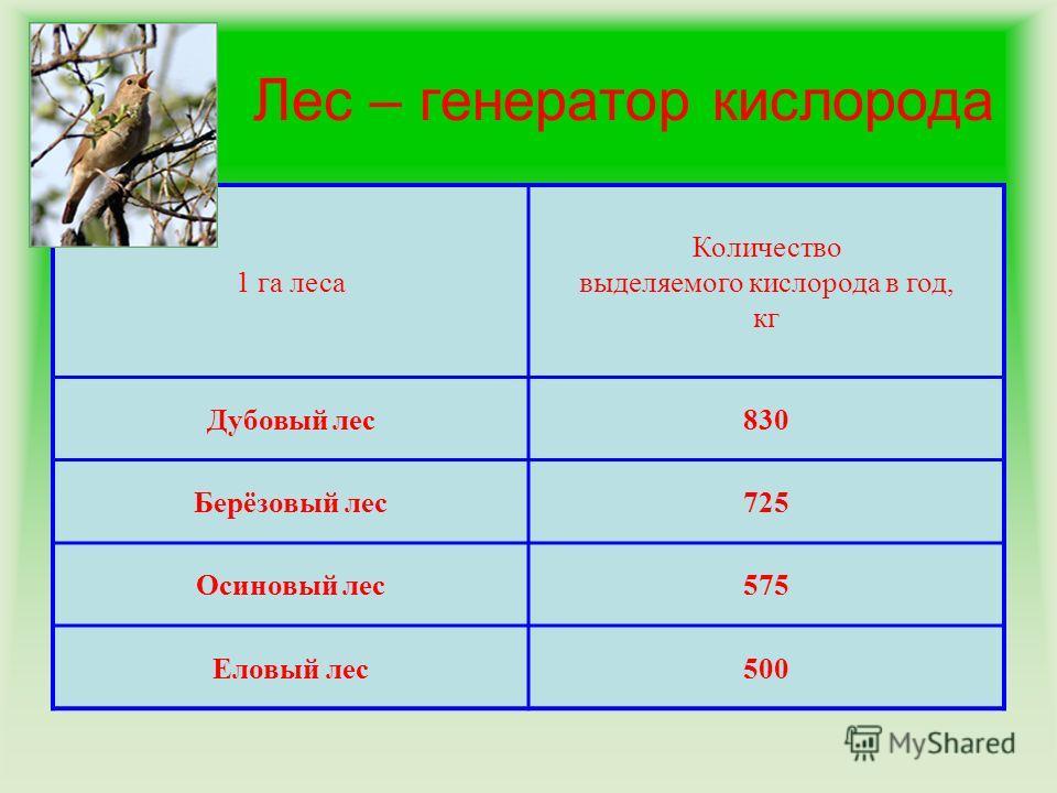 Лес – генератор кислорода 1 га леса Количество выделяемого кислорода в год, кг Дубовый лес830 Берёзовый лес725 Осиновый лес575 Еловый лес500