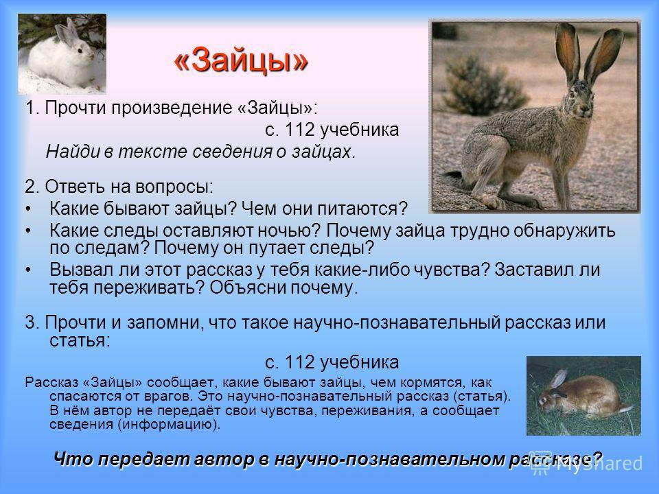 «Зайцы» 1. Прочти произведение «Зайцы»: с. 112 учебника Найди в тексте сведения о зайцах. 2. Ответь на вопросы: Какие бывают зайцы? Чем они питаются? Какие следы оставляют ночью? Почему зайца трудно обнаружить по следам? Почему он путает следы? Вызва