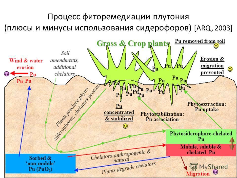 Процесс фиторемедиации плутония (плюсы и минусы использования сидерофоров) [ARQ, 2003]