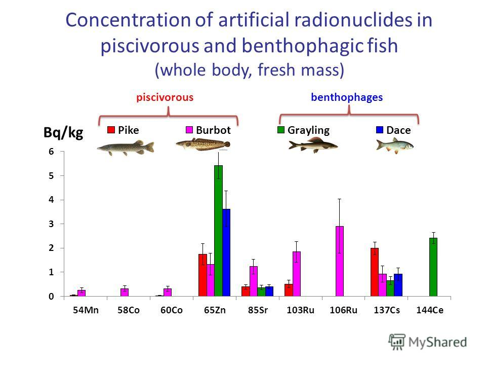 Concentration of artificial radionuclides in piscivorous and benthophagic fish (whole body, fresh mass)
