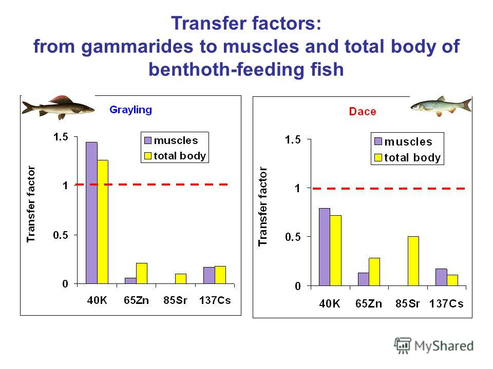 Transfer factors: from gammarides to muscles and total body of benthoth-feeding fish