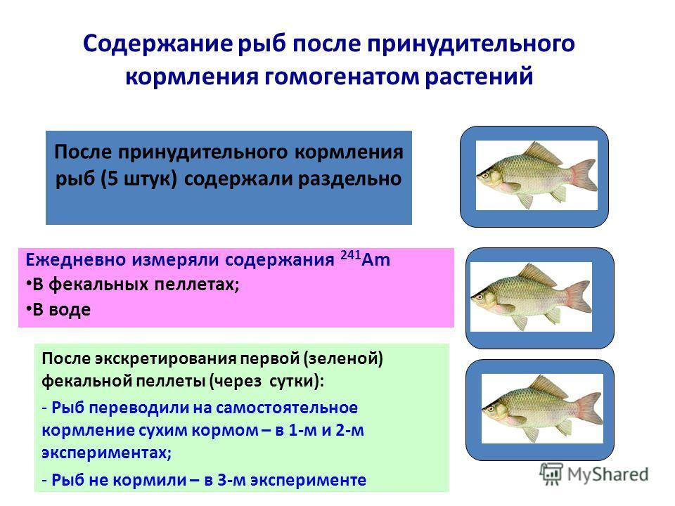 Содержание рыб после принудительного кормления гомогенатом растений Ежедневно измеряли содержания 241 Am В фекальных пеллетах; В воде После принудительного кормления рыб (5 штук) содержали раздельно После экскретирования первой (зеленой) фекальной пе