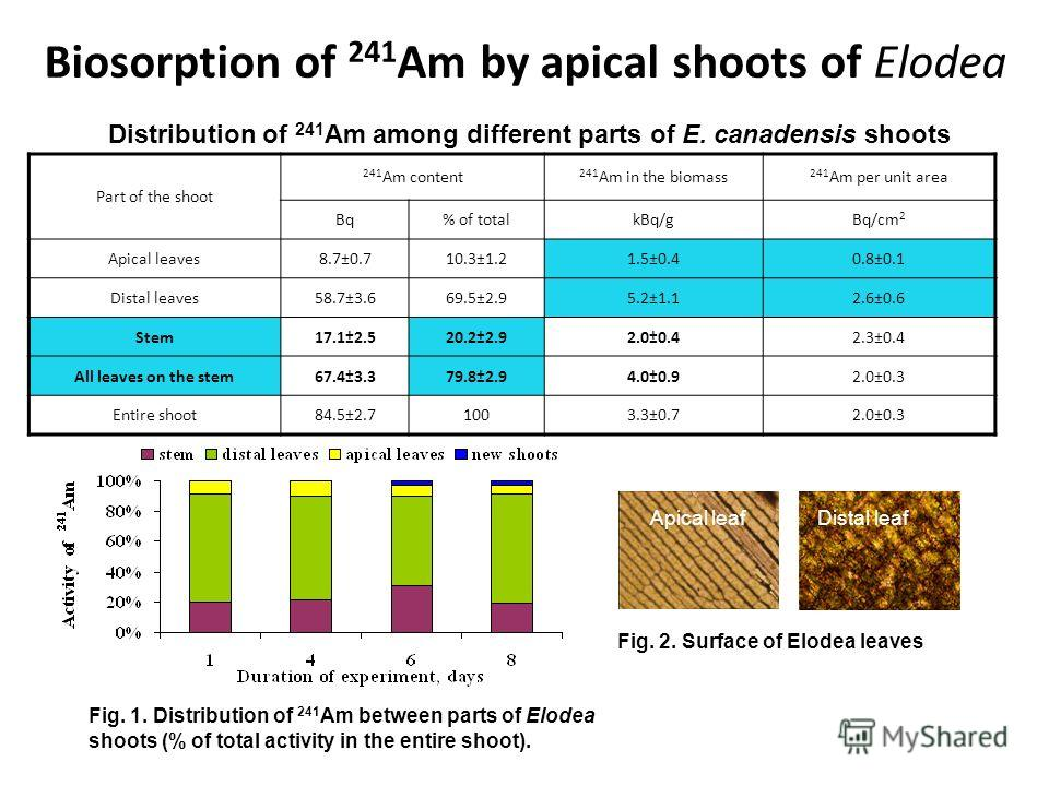 Biosorption of 241 Am by apical shoots of Elodea Part of the shoot 241 Am content 241 Am in the biomass 241 Am per unit area Bq% of totalkBq/gBq/cm 2 Apical leaves8.7±0.710.3±1.21.5±0.40.8±0.1 Distal leaves58.7±3.669.5±2.95.2±1.12.6±0.6 Stem17.1±2.52