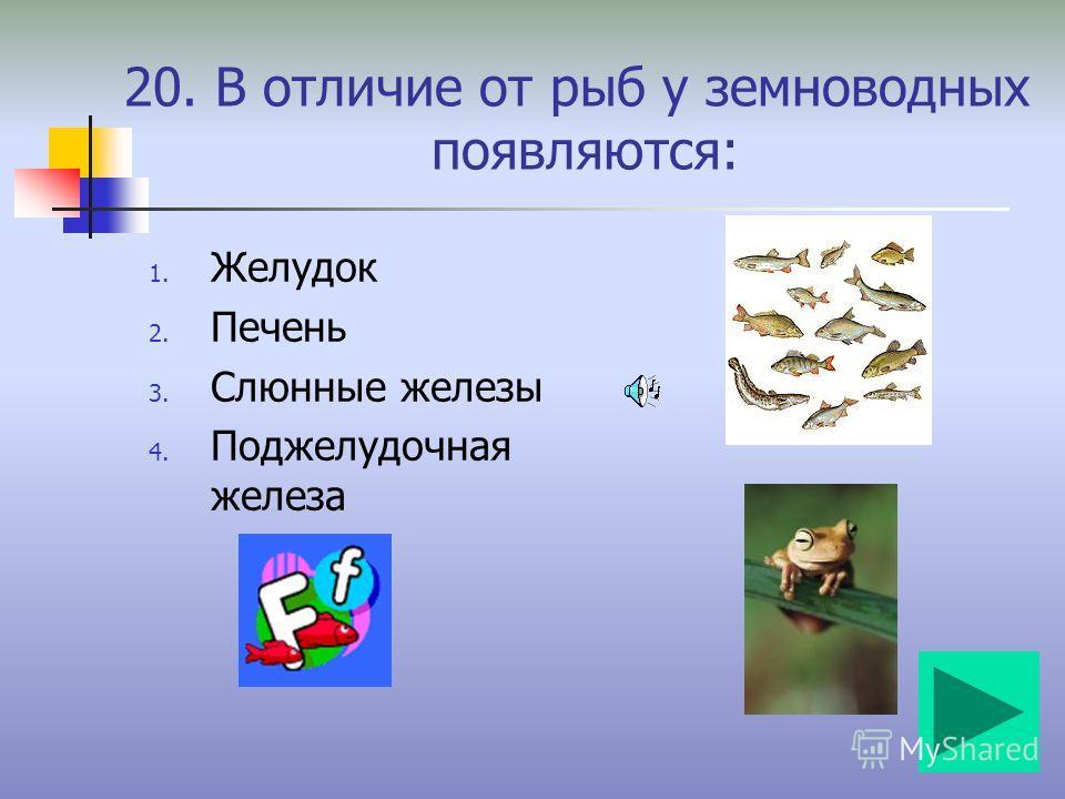 19. Крупной рыбой моря считают: 1. Китовую акулу 2. Усатого кита 3. Атлантическую сельдь 4. Обыкновенного сома