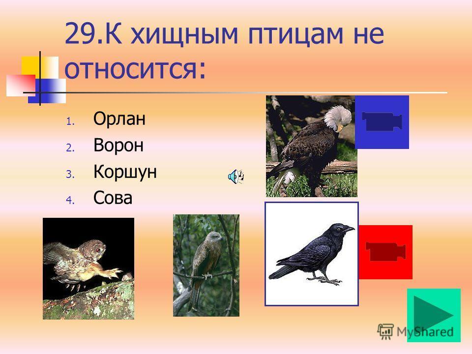 28. К отряду парнокопытных относят: 1. Зебра 2. Носорог 3. Лошадь 4. Овцебык