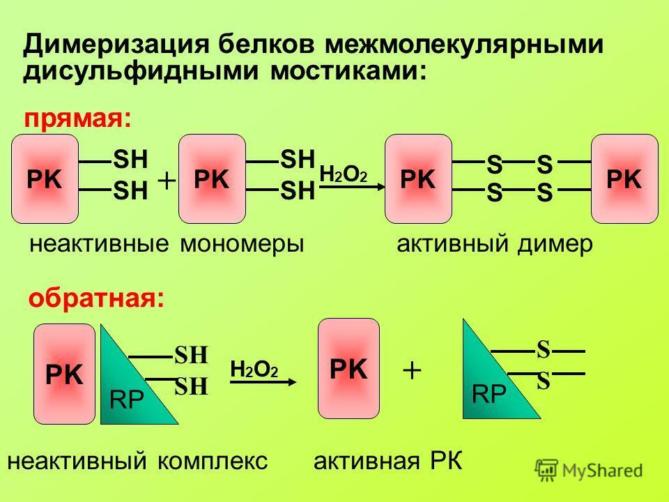 Димеризация белков межмолекулярными дисульфидными мостиками: прямая: PK SH PK SH + неактивные мономеры H2O2H2O2 PK SS SS активный димер обратная: PK RP SH неактивный комплекс PK H2O2H2O2 + RP SSSS активная РК