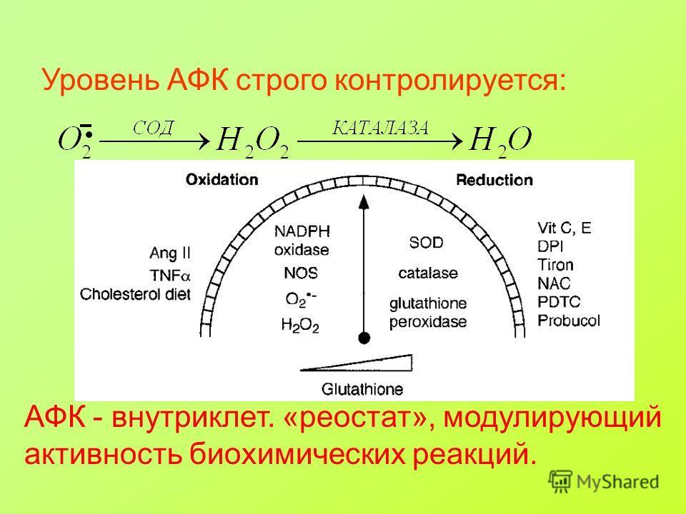 АФК - внутриклет. «реостат», модулирующий активность биохимических реакций. Уровень АФК строго контролируется:
