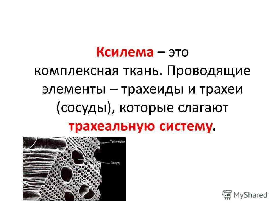 Ксилема – это комплексная ткань. Проводящие элементы – трахеиды и трахеи (сосуды), которые слагают трахеальную систему.