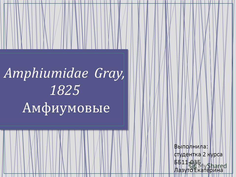 Amphiumidae Gray, 1825 Амфиумовые Выполнила : студентка 2 курса ББ 11-03 Б Лазуто Екатерина