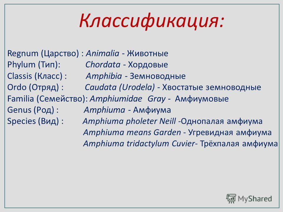 Regnum (Царство) : Animalia - Животные Phylum (Тип): Chordata - Хордовые Classis (Класс) : Amphibia - Земноводные Ordo (Отряд) : Caudata (Urodela) - Хвостатые земноводные Familia (Семейство): Amphiumidae Gray - Амфиумовые Genus (Род) : Amphiuma - Амф