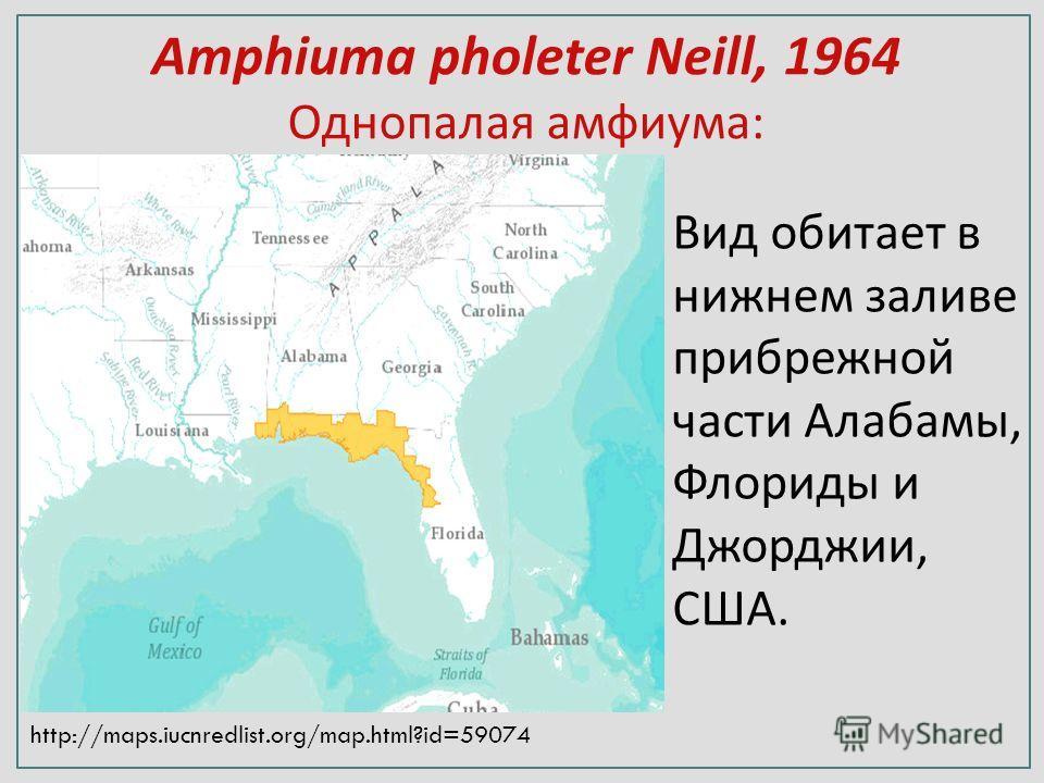 Amphiuma pholeter Neill, 1964 Однопалая амфиума: http://maps.iucnredlist.org/map.html?id=59074 Вид обитает в нижнем заливе прибрежной части Алабамы, Флориды и Джорджии, США.
