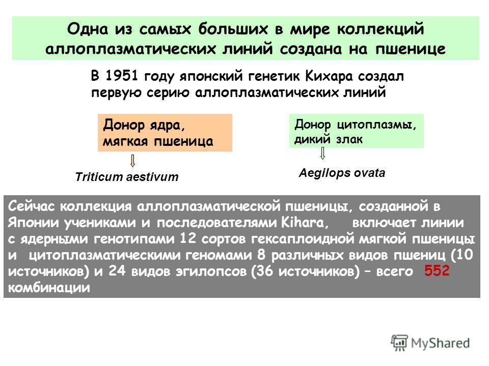 Одна из самых больших в мире коллекций аллоплазматических линий создана на пшенице В 1951 году японский генетик Kихара создал первую серию аллоплазматических линий Triticum aestivum Aegilops ovata Донор ядра, мягкая пшеница Донор цитоплазмы, дикий зл