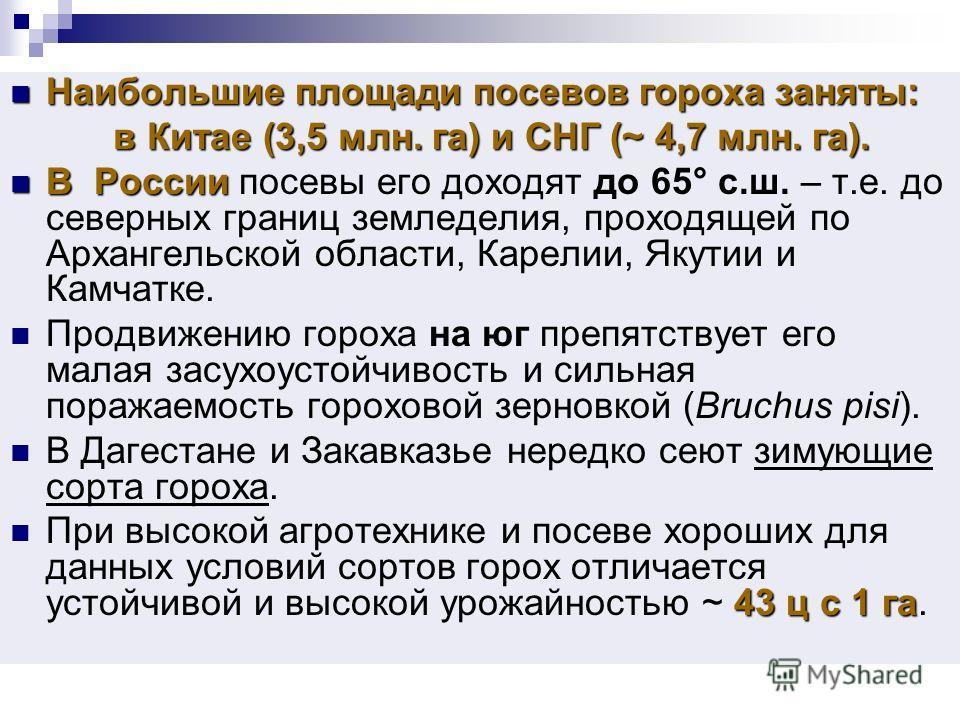 Наибольшие площади посевов гороха заняты: Наибольшие площади посевов гороха заняты: в Китае (3,5 млн. га) и СНГ (~ 4,7 млн. га). в Китае (3,5 млн. га) и СНГ (~ 4,7 млн. га). В России В России посевы его доходят до 65° с.ш. – т.е. до северных границ з