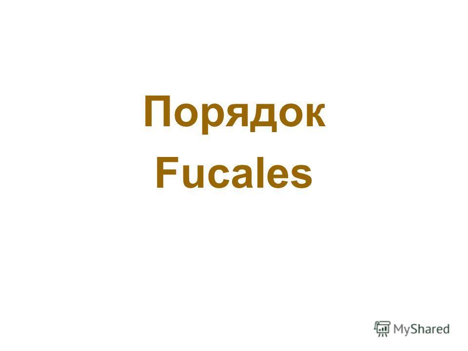 Порядок Fucales