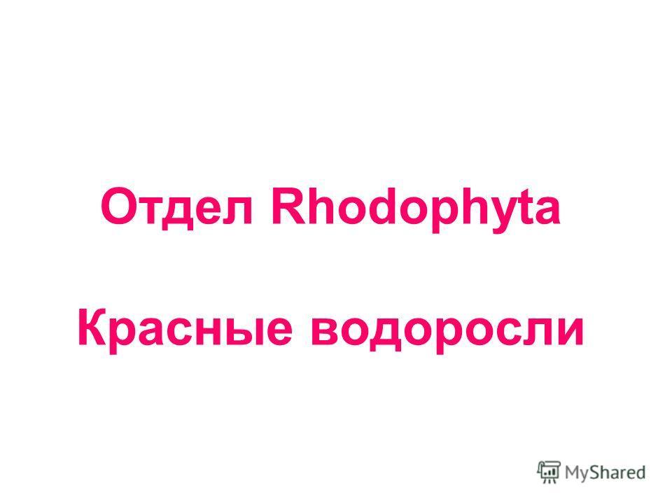 Отдел Rhodophyta Красные водоросли