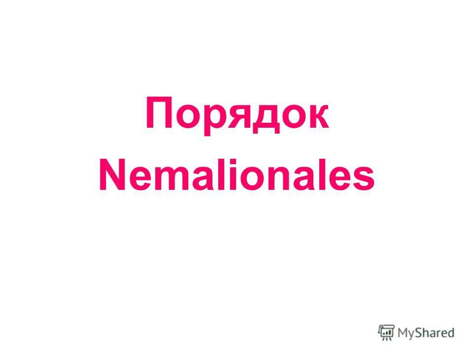 Порядок Nemalionales