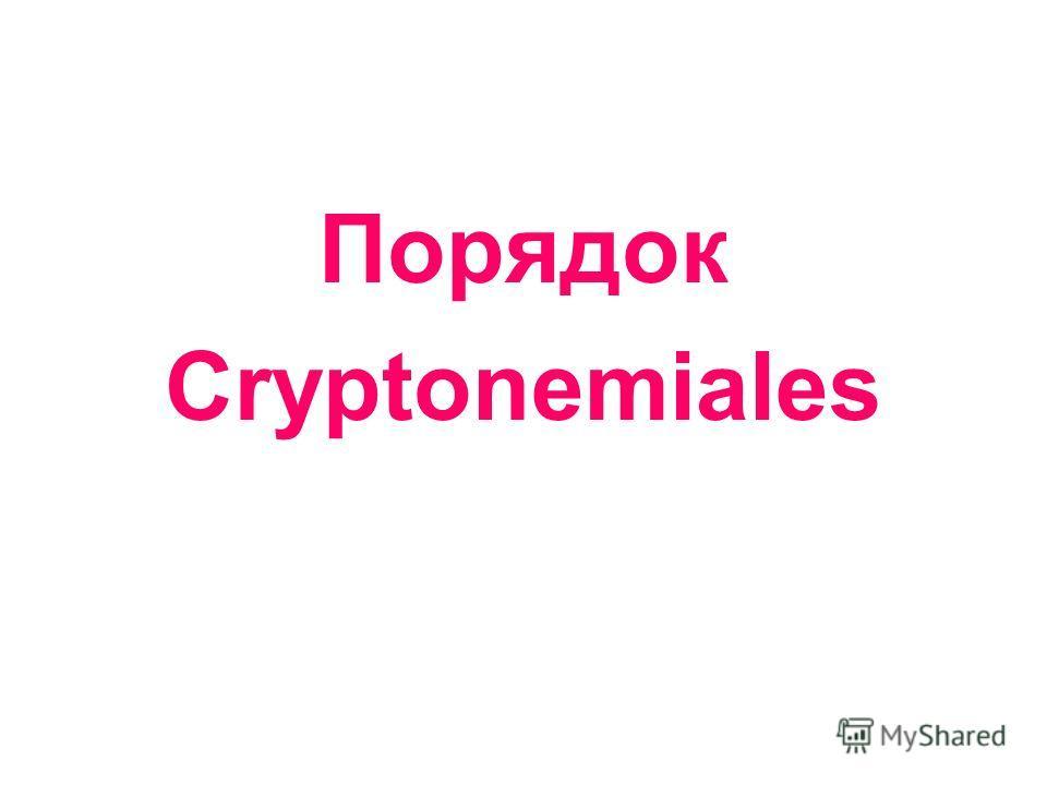 Порядок Сryptonemiales