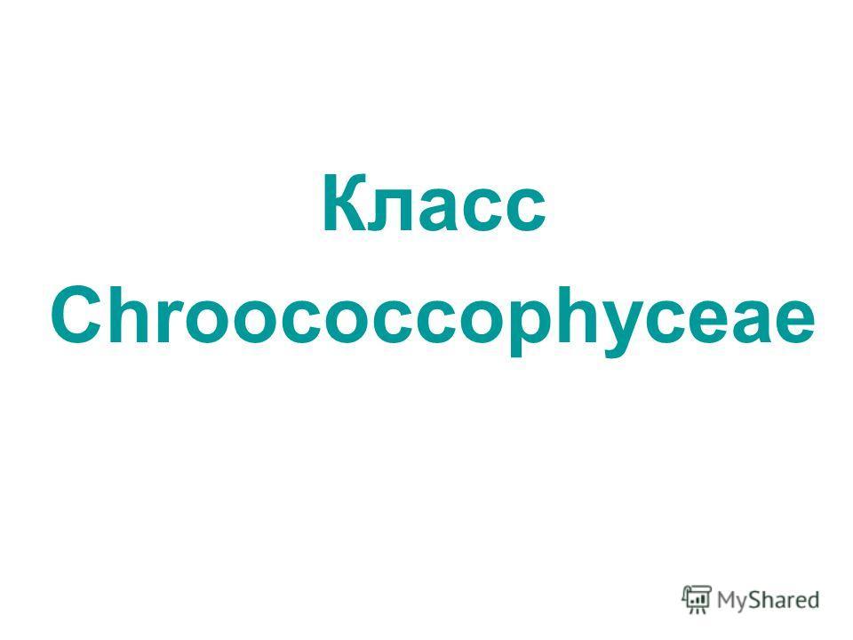 Класс Chroococcophyceae