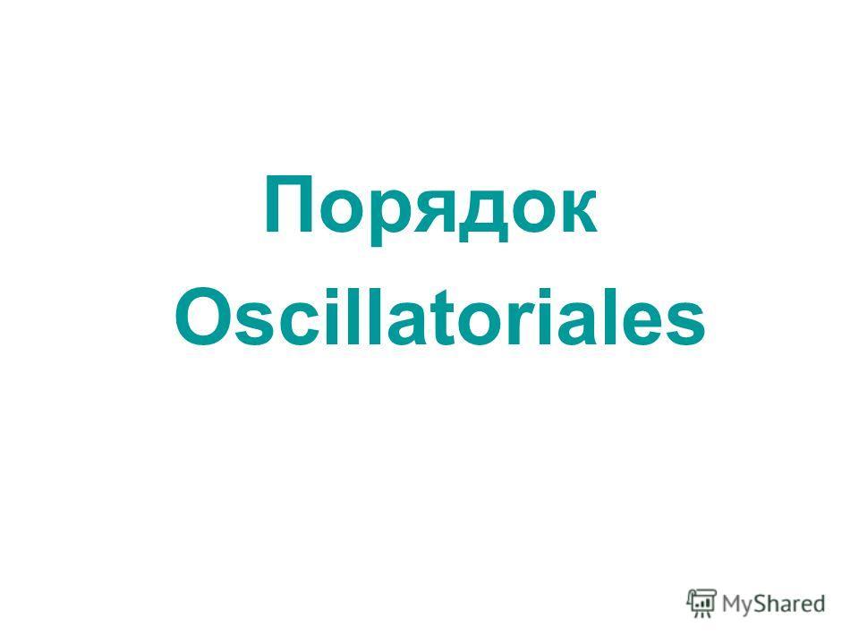 Порядок Oscillatoriales