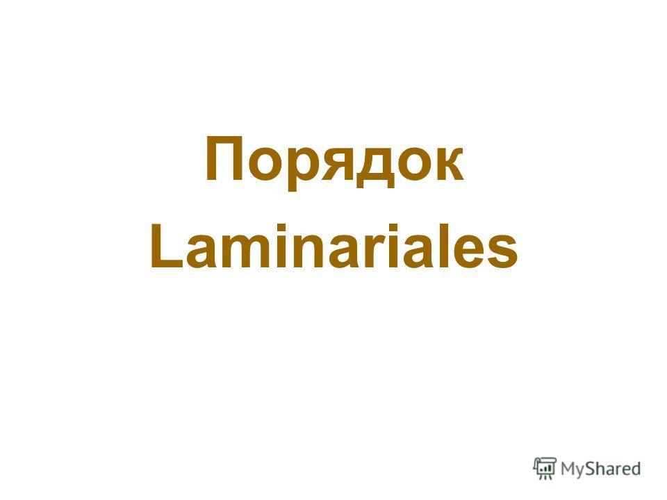 Порядок Laminariales