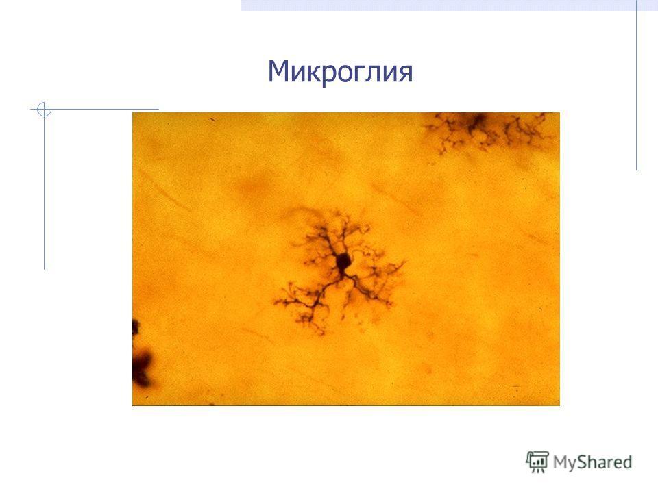Микроглия