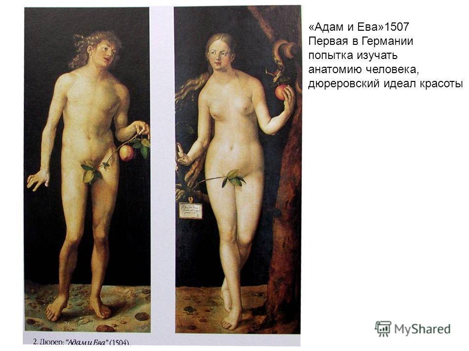 «Адам и Ева»1507 Первая в Германии попытка изучать анатомию человека, дюреровский идеал красоты