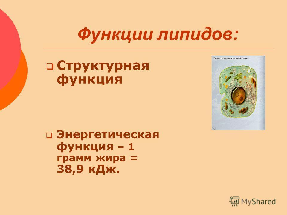 Функции липидов: Структурная функция Энергетическая функция – 1 грамм жира = 38,9 кДж.