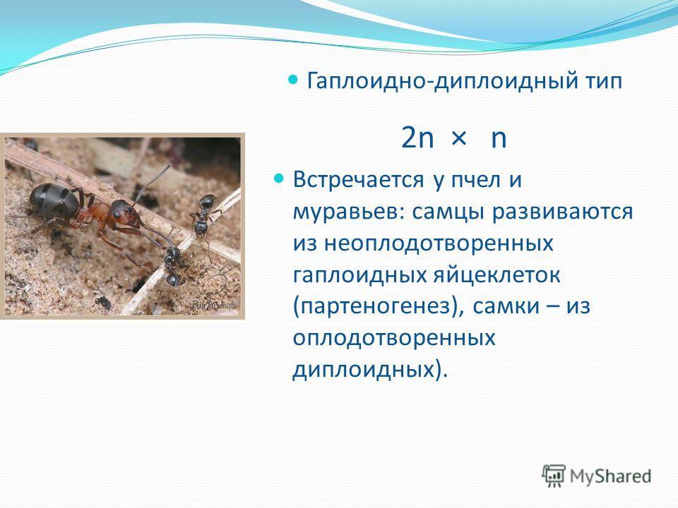 Гаплоидно-диплоидный тип 2n × n Встречается у пчел и муравьев: самцы развиваются из неоплодотворенных гаплоидных яйцеклеток (партеногенез), самки – из оплодотворенных диплоидных).