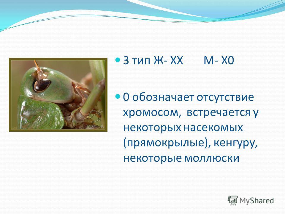 3 тип Ж- ХХ М- Х0 0 обозначает отсутствие хромосом, встречается у некоторых насекомых (прямокрылые), кенгуру, некоторые моллюски