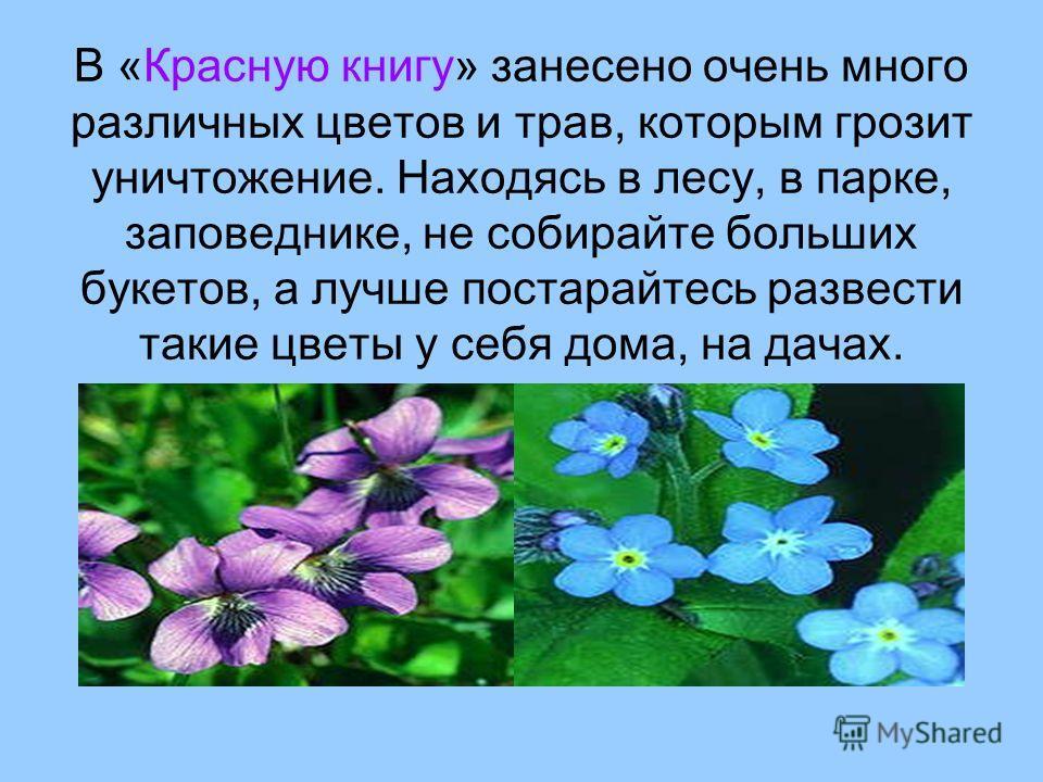 В «Красную книгу» занесено очень много различных цветов и трав, которым грозит уничтожение. Находясь в лесу, в парке, заповеднике, не собирайте больших букетов, а лучше постарайтесь развести такие цветы у себя дома, на дачах.