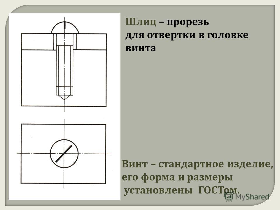 Шлиц – прорезь для отвертки в головке винта Винт – стандартное изделие, его форма и размеры установлены ГОСТом.