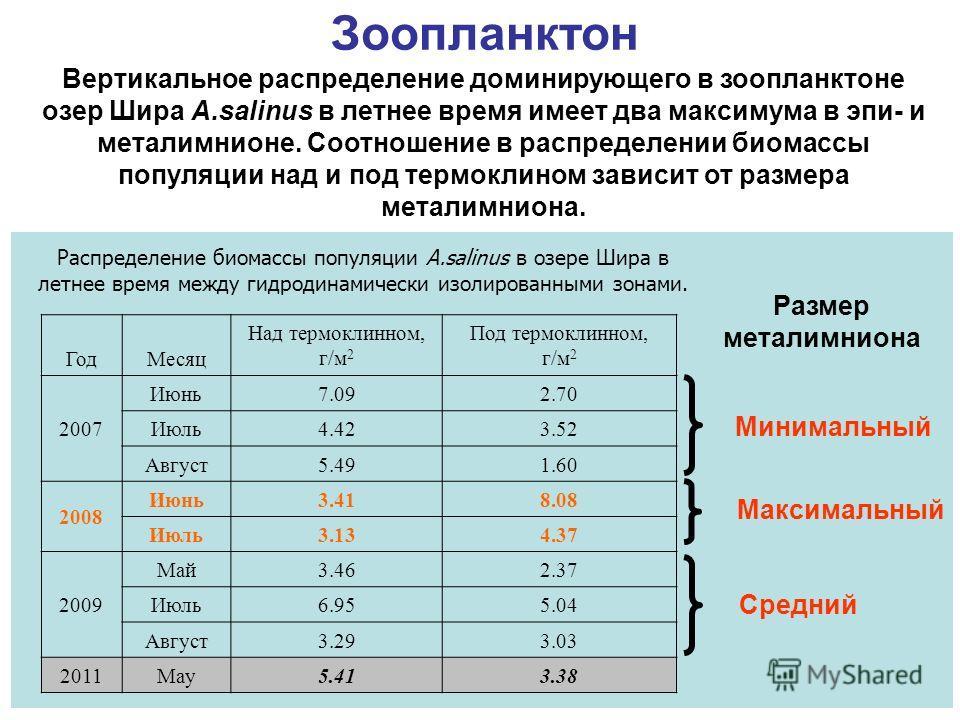 Распределение биомассы популяции A.salinus в озере Шира в летнее время между гидродинамически изолированными зонами. ГодМесяц Над термоклинном, г/м 2 Под термоклинном, г/м 2 2007 Июнь7.092.70 Июль4.423.52 Август5.491.60 2008 Июнь3.418.08 Июль3.134.37