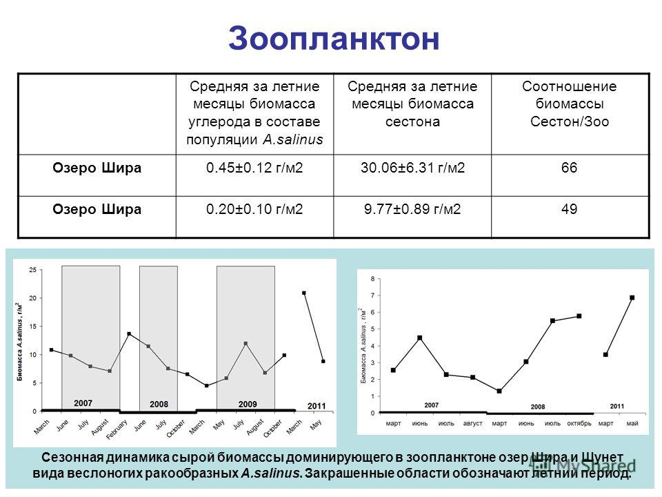 Сезонная динамика сырой биомассы доминирующего в зоопланктоне озер Шира и Шунет вида веслоногих ракообразных A.salinus. Закрашенные области обозначают летний период. Зоопланктон Средняя за летние месяцы биомасса углерода в составе популяции A.salinus