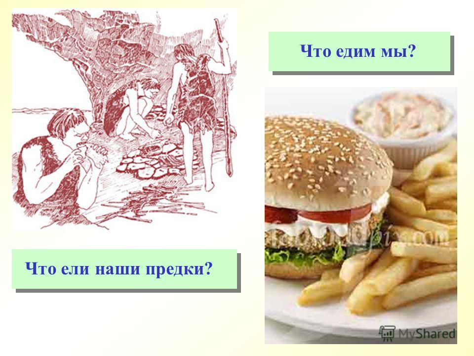 Что ели наши предки? Что едим мы?