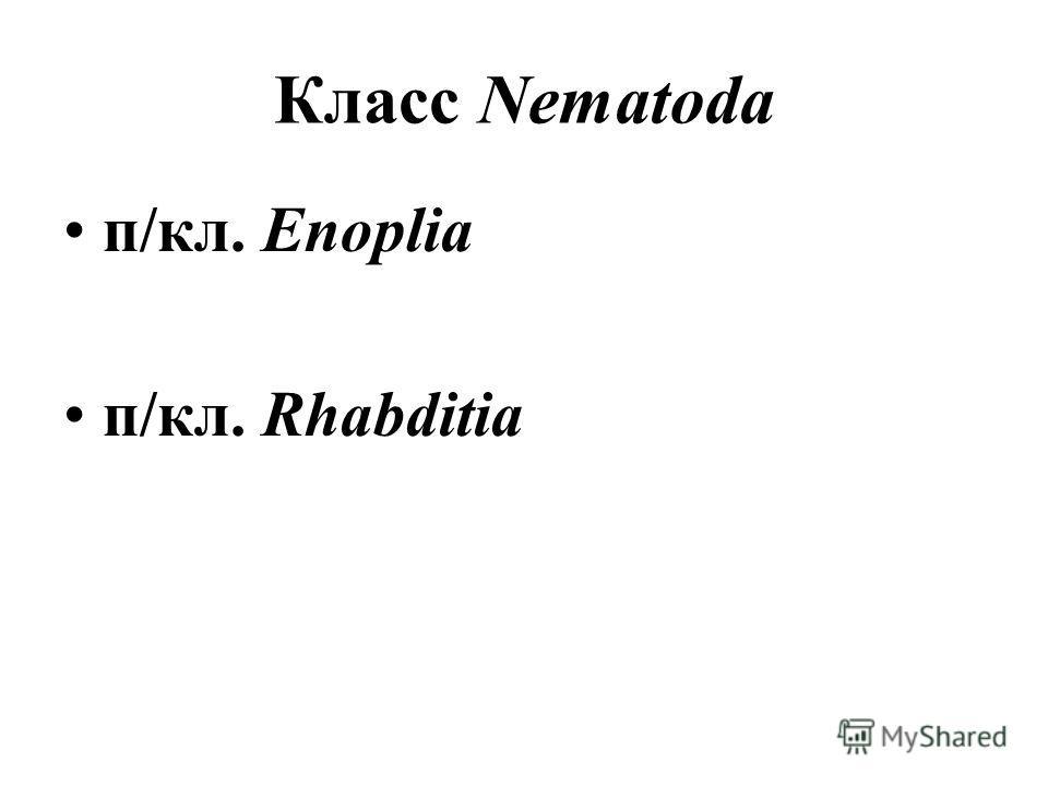 Класс Nematoda п/кл. Enoplia п/кл. Rhabditia