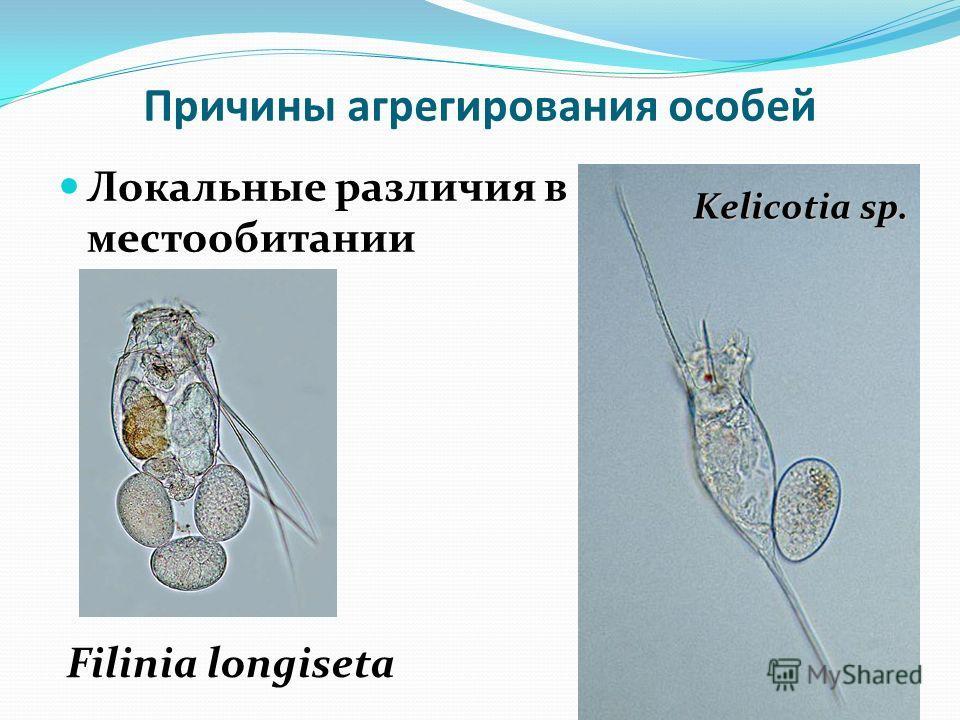 Причины агрегирования особей Локальные различия в местообитании Filinia longiseta Kelicotia sp.