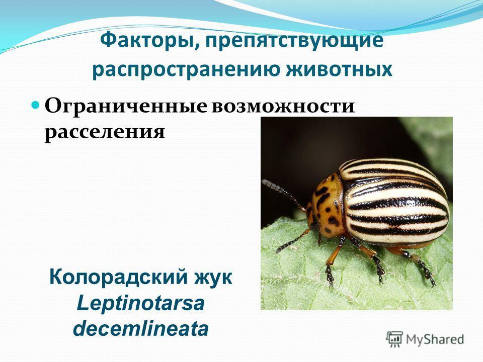 Факторы, препятствующие распространению животных Ограниченные возможности расселения Колорадский жук Leptinotarsa decemlineata