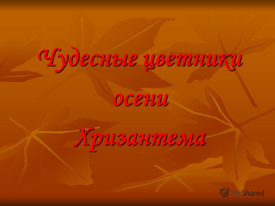 Чудесные цветники осениХризантема