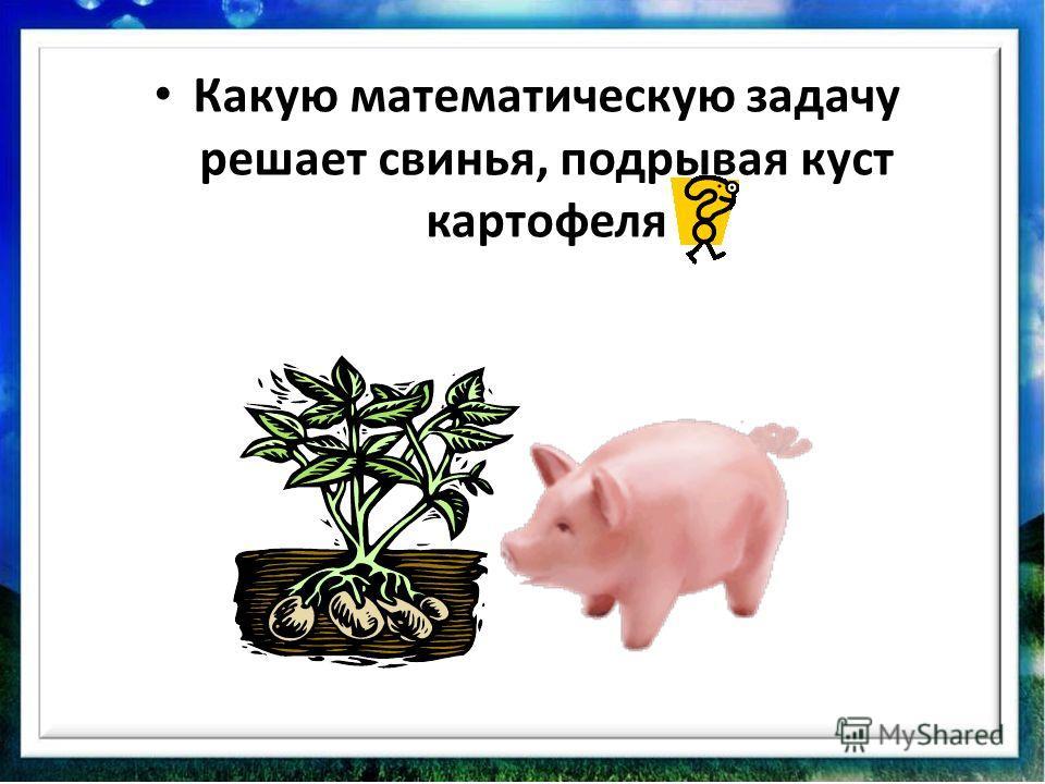 Какую математическую задачу решает свинья, подрывая куст картофеля