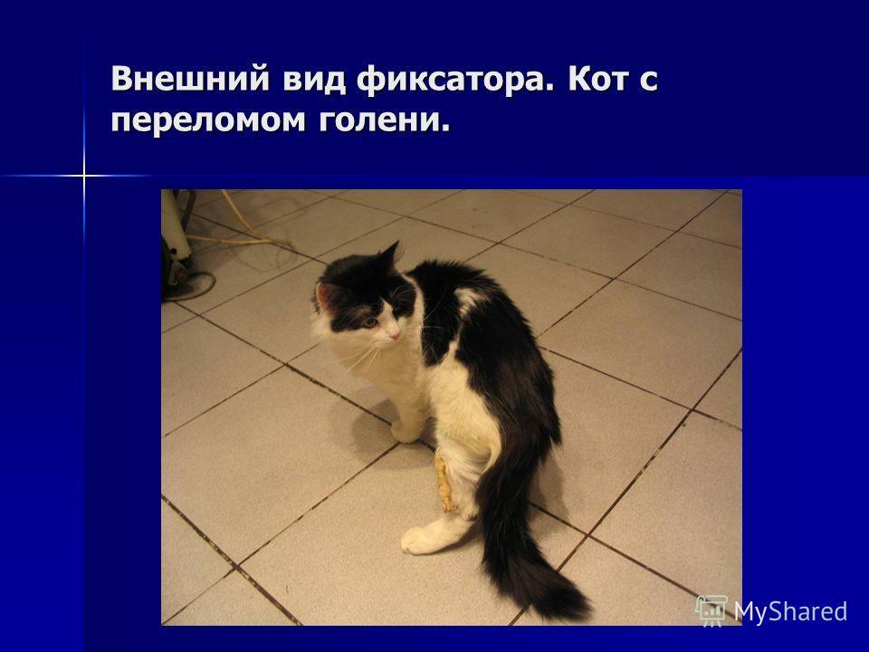 Внешний вид фиксатора. Кот с переломом голени.
