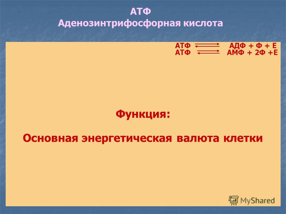 АТФ Аденозинтрифосфорная кислота Макроэргические связи Функция: Основная энергетическая валюта клетки АТФАДФ + Ф + Е АМФ + 2Ф +ЕАТФ