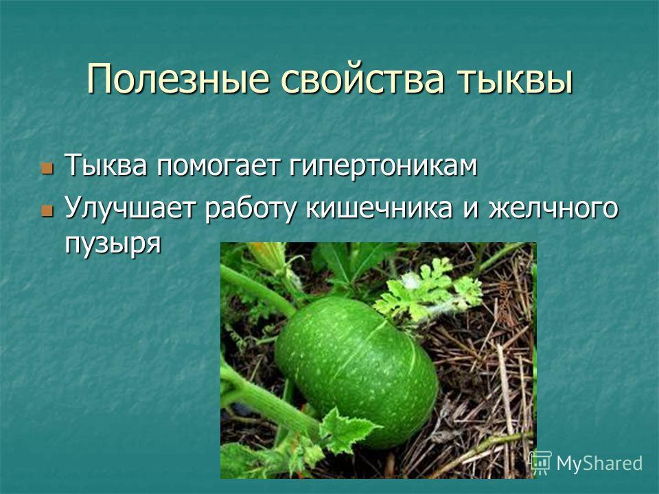 Полезные свойства тыквы Тыква помогает гипертоникам Тыква помогает гипертоникам Улучшает работу кишечника и желчного пузыря Улучшает работу кишечника и желчного пузыря