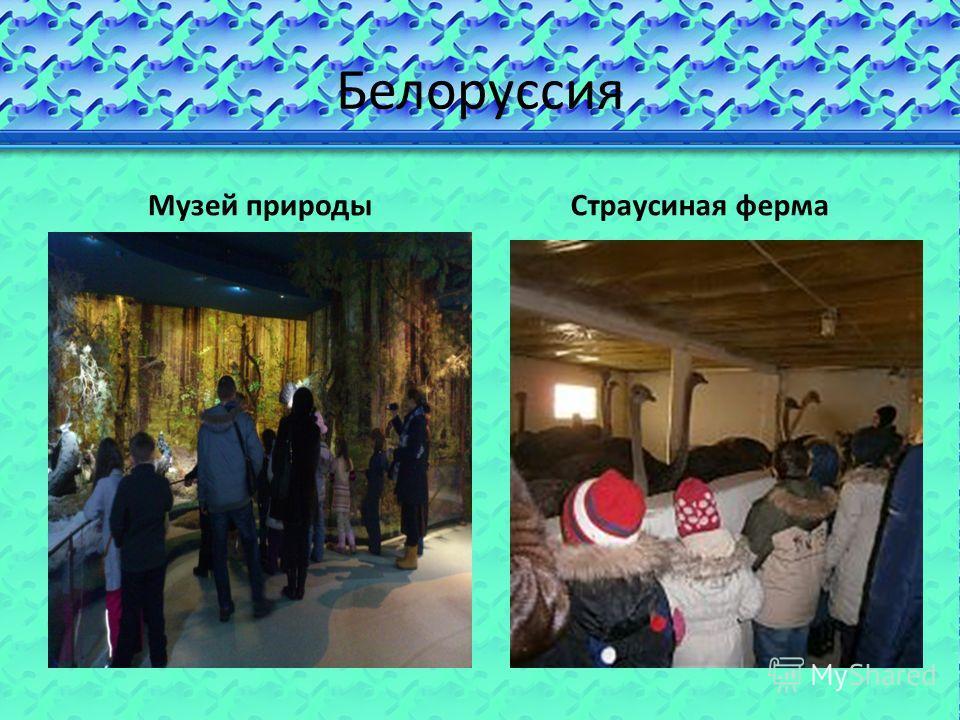 Белоруссия Музей природыСтраусиная ферма