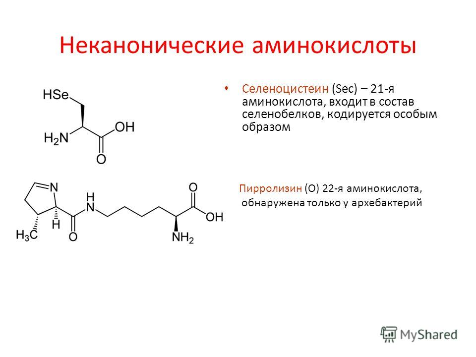 Неканонические аминокислоты Селеноцистеин (Sec) – 21-я аминокислота, входит в состав селенобелков, кодируется особым образом Пирролизин (О) 22-я аминокислота, обнаружена только у архебактерий
