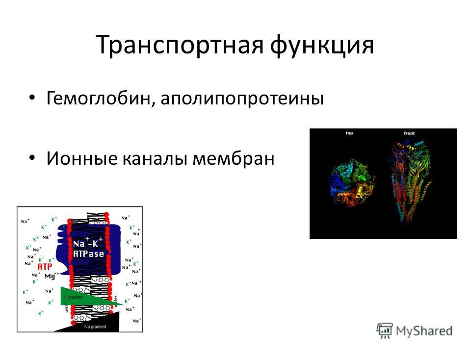 Транспортная функция Гемоглобин, аполипопротеины Ионные каналы мембран