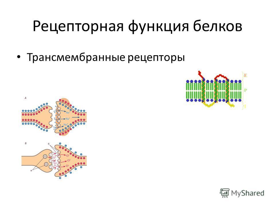 Рецепторная функция белков Трансмембранные рецепторы