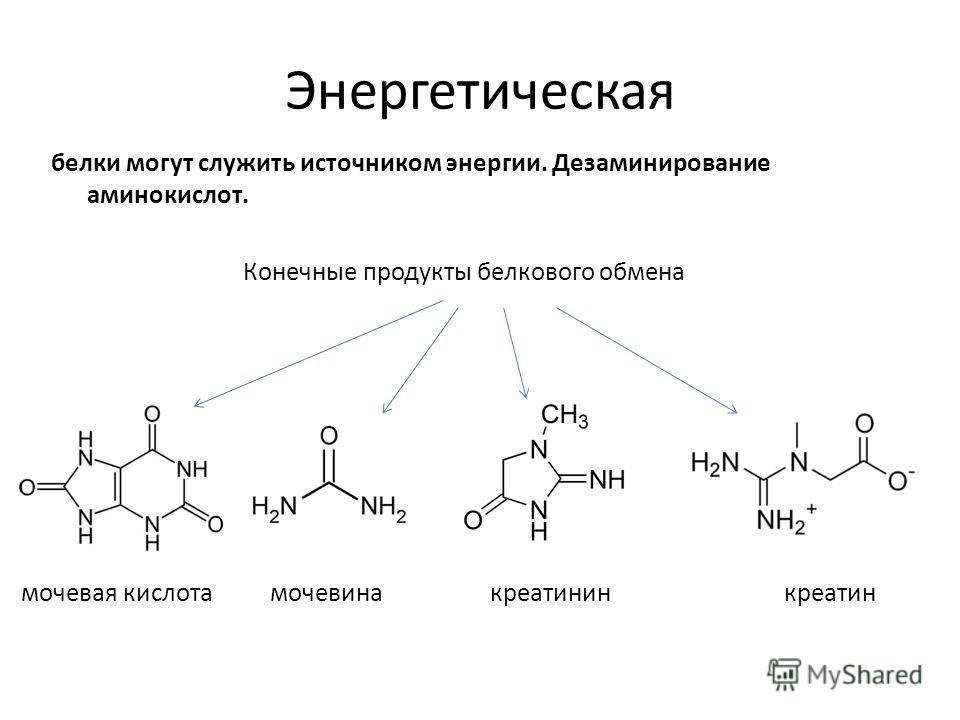 Энергетическая белки могут служить источником энергии. Дезаминирование аминокислот. Конечные продукты белкового обмена мочевая кислотамочевинакреатининкреатин