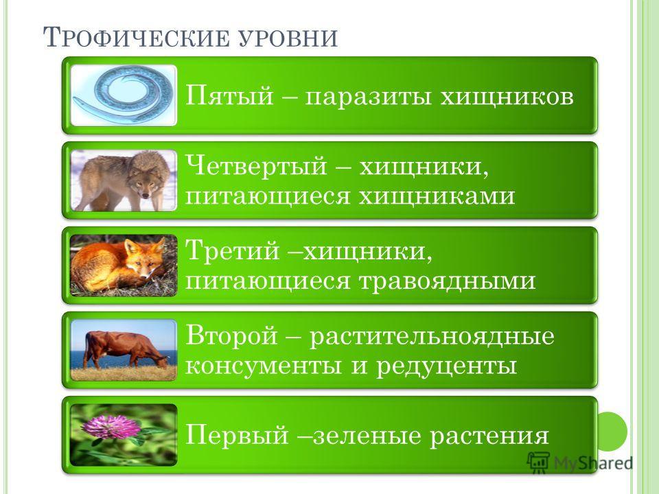 Т РОФИЧЕСКИЕ УРОВНИ Пятый – паразиты хищников Четвертый – хищники, питающиеся хищниками Третий –хищники, питающиеся травоядными Второй – растительноядные консументы и редуценты Первый –зеленые растения