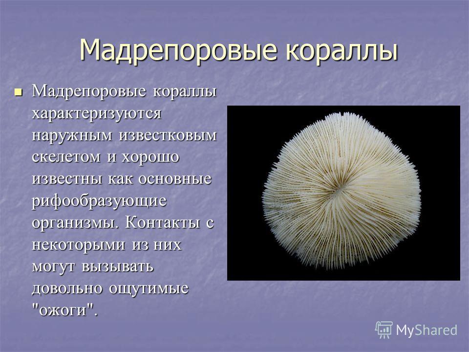 Мадрепоровые кораллы Мадрепоровые кораллы характеризуются наружным известковым скелетом и хорошо известны как основные рифообразующие организмы. Контакты с некоторыми из них могут вызывать довольно ощутимые